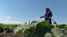 Calgary - Syrian newcomers' farm