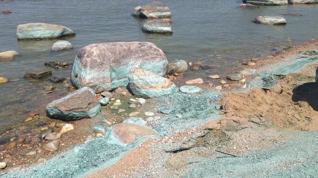 Beach algae