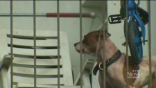 Dog to blame for man's death, girlfriend says