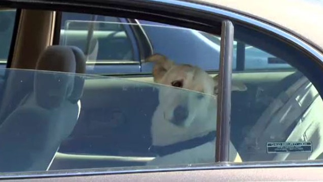 A dog in a car