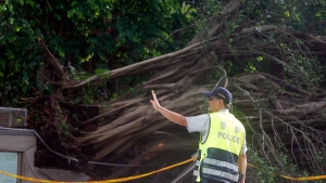 A police officer controls the traffic in front of a tree uprooted by strong winds caused by Typhoon Nesat in Taipei, Taiwan, Sunday, July 30, 2017. (AP Photo / Chiang Ying-ying)