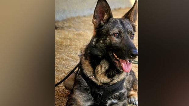 Calgary police dog stabbed