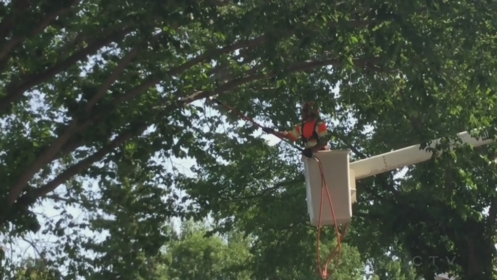 City reminds residents to not transport elm wood