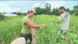 CTV Montreal: Self-service farm-fresh food