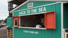 Touch Tank Hut