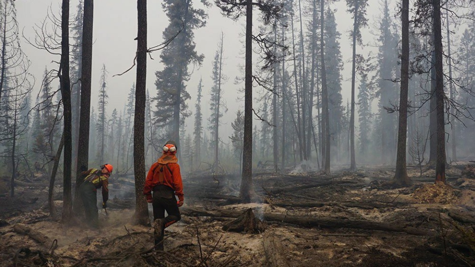 Fire crews assess and fall danger trees in the southwest section of the Verdant Creek wildfire near Highway 93S in a handout photo from Parks Canada. (HO-Parks Canada-M.Kinley/The Canadian Press)