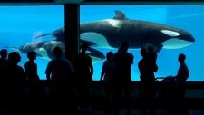 Marineland whale