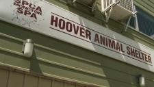 CTV Atlantic: Moncton SPCA vandalized