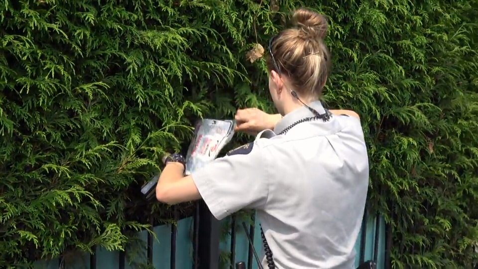 Police retrieved whatever the suspect hid in the bushes during their investigation. (CTV)