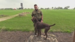 Maya trains with her handler on Friday, August 11, 2017. (Gerry Dewan / CTV London)