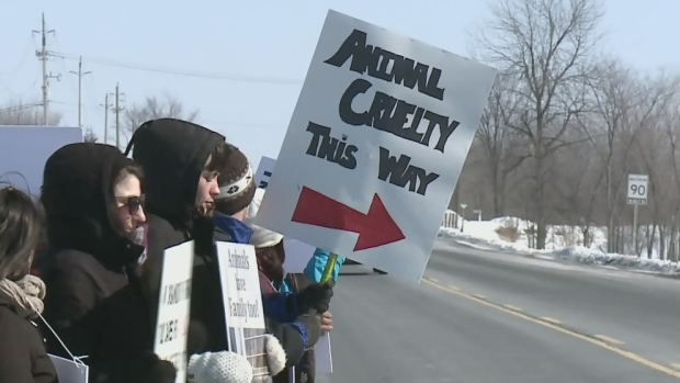 Video of animal treatment at Ottawa-area zoo sparks protest