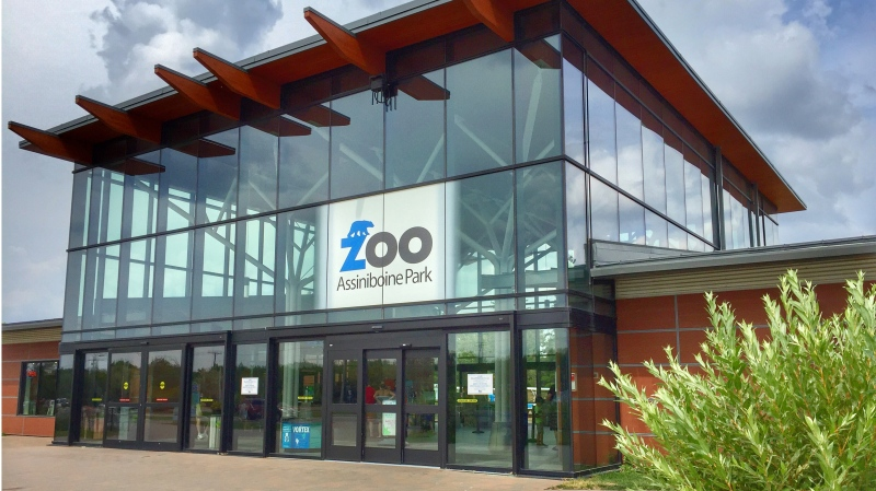 Just days after a tiger at the Bronx Zoo tested positive for COVID-19, the Assiniboine Park Zoo says it has strict biosecurity to protect the animals from the pandemic that is sweeping across the country.