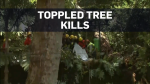 At least 13 dead after tree falls