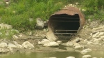 City says sewage flowed from zoo into river