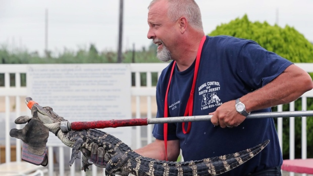 Alligator Turns Up in Atlantic City Motel Pool