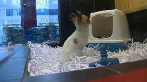The owner of Paws N Jaws pet shop in Nanaimo says he's opposed to a potential ban on retail pet sales because of the effect it will have on his business. Aug. 15, 2017. (CTV Vancouver Island)