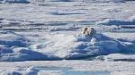 A polar bear is spotted on Tuesday, Aug. 15, 2017. (Omar Sachedina)
