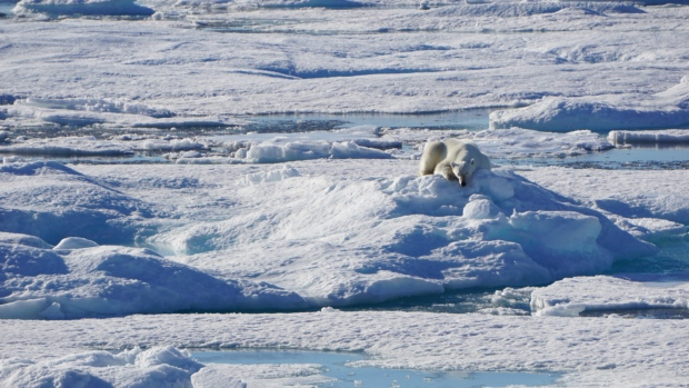 Polar bear spotted during C3 expedition