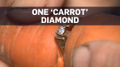 Lost wedding ring found 13 years later on carrot