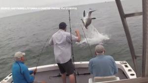 shark steals catch