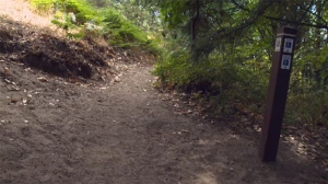 Mount Doug Park is home to dozens of trails and boasts some of the best panoramic views of the city, but one group says it's become a victim of its own popularity. Aug. 17, 2017. (CTV Vancouver Island)