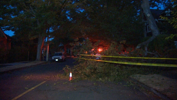 A large branch came crashing down in front of a home at the corner of Belmont Avenue and Vining Street in Fernwood Thursday night. Aug. 18, 2017. (CTV Vancouver Island)