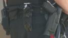 Officer shot with own gun severed three arteries