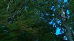 Fernwood woman narrowly escapes falling tree