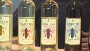 Prairie Bee