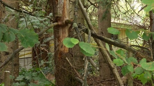 The abandoned Abbotsford home where the body was found can be seen through the trees. (CTV)