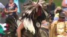 cambridge powwow