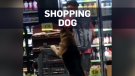 Dog helps owner grocery shop