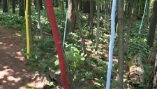 Forest art near Orillia