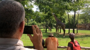 U.S. Air Force Col. Mark Henderson of Mississippi videoing giraffes at Nashville Zoo, in early stages of the eclipse in Nashville, Tenn., on  Monday, Aug. 21, 2017. (AP Photo/Seth Borenstein)