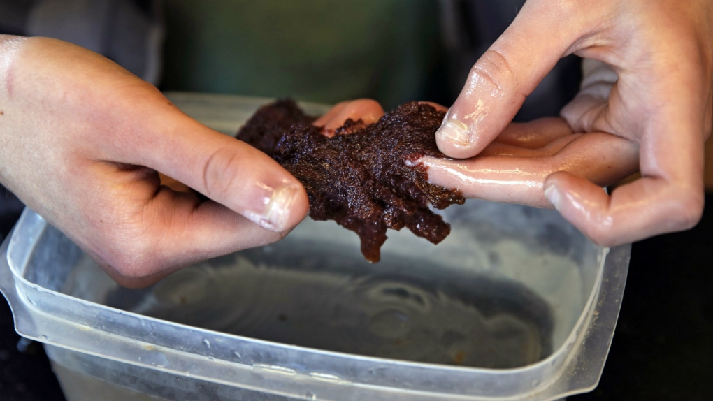 Kelp dying due to warmer oceans