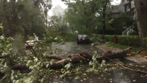 Trees have fallen in NDG due to a powerful storm (photo: Caroline Van Vlaardingen / CTV Montreal)