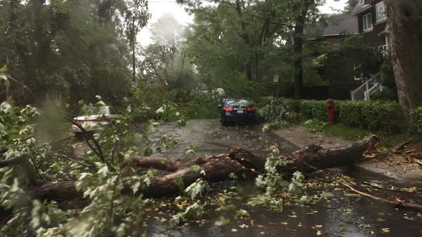 Trees have fallen in NDG due to a powerful storm (photo: Caroline Van Vlaardingen / CTV Montreal)