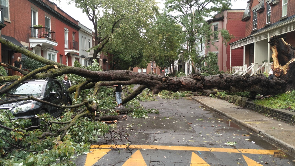 IN PHOTOS: Montreal wallopped by storm | CTV News