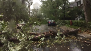 A powerful storm knocked down trees in Montreal on Tuesday, August 22, 2017. (Caroline Van Vlaardingen / CTV Montreal)