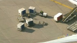 baggage handlers, ground crew, Pearson Airport