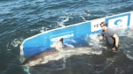 CTV Atlantic: Hilton the Shark lurking in N.S.