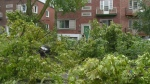 CTV Montreal: Insurance claims