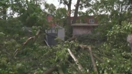 Three trees fell in Matthew Wood's backyard, hitting his house and crushing a shed