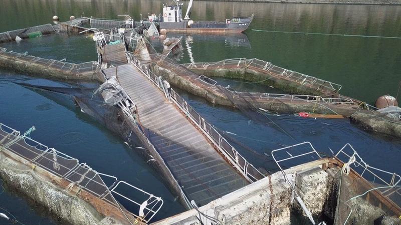 Atlantic salmon escape to Pacific