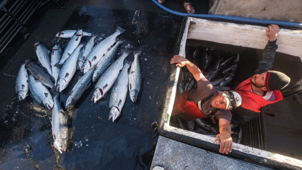 Collapse at salmon farm renews debate about fish farming for Fish farms in california