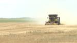 Sask. harvest ahead of schedule
