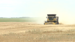 Sask. harvest ahead of schedule