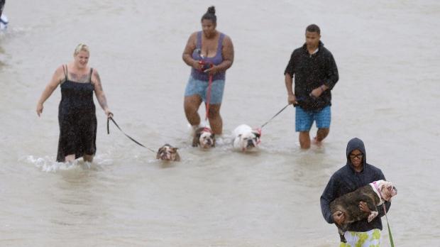 Ctv News Kitchener Rescue Dogs