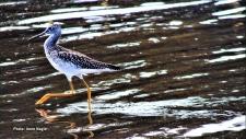 Unidentified bird in Constance Bay. (Irene Nagle/CTV Viewer)