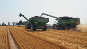 Fields to Forks: Grain Farmers of Ontario